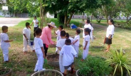 ปลูกผัก เพื่อให้โรงเรียนได้มีพืชผักสวนครัวทำกินเองกันได้