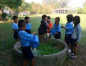 ผักบุ้ง ของน้องๆเด็กๆชั้นอนุบาลศึกษาได้ทำการปลูกผักบุ้ง