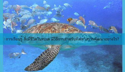 การเรียนรู้ สิ่งมีชีวิตในทะเล มีวิธีการสำหรับทิศทางการพัฒนาอย่างไร?